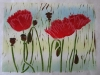 helen-pakeman-poppies